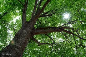 20110428-木の緑.jpg